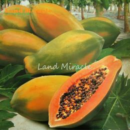 semi di alberi crescenti Sconti Meradol Miradol Caribbean Red Caribbean Sunrise Papaya Plant 10 Semi Big Fruit Dwarf Papaya Semi di frutta Zampa Zampa Miniature Organic No-Gmo