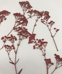 Wholesale Earing Displays - 1000pcs Per Bag Red Babysbreath Dry Flower For DIY Card decoration Nail And Earing Decorative Wholesale