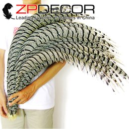 Wholesale 35 Inch Pheasant Feathers - ZPDECOR 35 to 40 inch(87-100cm) Rare and Precious Natural Zebra Lady Amherst Pheasant Tail Feathers Free Shipping by Express(EMS and DHL)