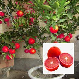 piante di ortaggi comuni Sconti 20 Pz Semi di Limone Rosso Nuovo Arrivo Drawf Albero Bonsai Semi di Frutta Biologica per la Casa Giardino Forniture Facile Coltivare Semi Esotici In Vaso
