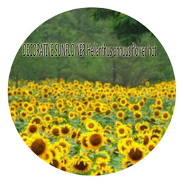 Wholesale Decorative Flowers Prices - 1000pcs a set DECORATIVE SUNFLOWER Helianthus annuus Flower Seed Hot Rare Seed Home Garden Great Quality Great Service Great Price For You