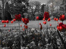 dessin d'art populaire Promotion 5D DIY Gris Paysage Fleur Rouge Plein De Diamant Peinture Point De Croix Kits Sur le forage Décoration de La Maison