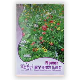 2019 flores tolerantes à seca 220Seed / pack Embalagem Original Resistente à Seca Heliophilous Wildflowers Mix Sementes de Flores Coloridas flores tolerantes à seca barato