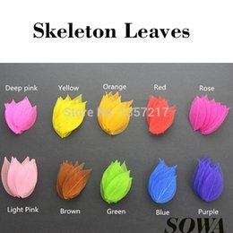 Wholesale- Free Shipping Wholesale Multi Color Dyed Leaf Vein Natural Skeleton Leaves Organic Craft DIY ($6 100PCS) Coupons
