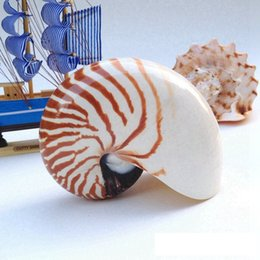 Wholesale Ship Aquarium Ornaments - Free Shipping(1pcs lot)Chambered Nautilus Natural Shell & Conch Home Decoration Aquarium Landscaping Shell Ornaments