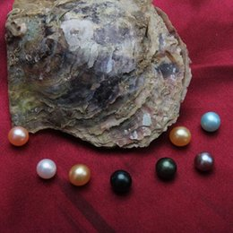 Wholesale Free Big Natural - Akoya Pearl Oyster 2018 big Round 5-7mm Colors seawater natural Cultured in Fresh Oyster Pearl Mussel Farm Supply Free Shipping wholesale
