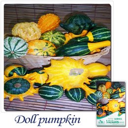 Wholesale Dolls Buy - Buy 2 Get 1!(Can accumulate ) 1 Pack 10 Seed Of Odd Shape Be Riotous With Colour Doll Pumpkin Seeds B012