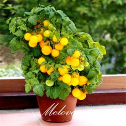 Bonsai pomodoro online-100 Pz Giallo Pomodoro Ciliegino Non-OGM Semi di ortaggi Facile da coltivare DIY Casa Giardino Bonsai Vegetale