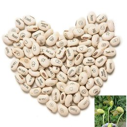 Wholesale Magic Growing Message Beans Seeds - Magic Growing love gift Message Beans Seeds Magic Bean English Bonsai Green Office Home Decoration Magic Beans 08004free shipping