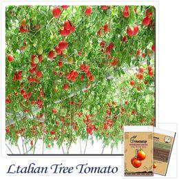 Wholesale Italian Seeds - Vegetable Seeds 50pcs Italian Tree Tomato *RARE HEIRLOOM!!* SEEDS OF LIFE TOMATO GIANT TREE Free Shipping
