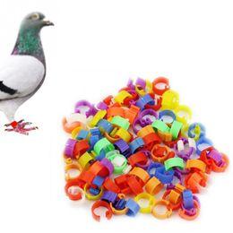 Wholesale Dive Rings Wholesale - 100Pcs lot 8mm Chicken Hen Pigeon Leg Poultry Dove Bird Chicks Duck Parrot Clip Rings Band