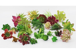 Wholesale Plants Office - Artificial Plants With Vase Bonsai Tropical Cactus Fake Succulent Plant Potted Office Home Decorative Flower Pot wa3741