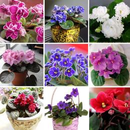 2019 variedades de flores 50 PCS uma Variedade de Cores Violetas Sementes de Plantas de Jardim (Vermelho Azul Roxo Branco) Violeta Flores Perenes Erva Matthiola Incana Semente variedades de flores barato