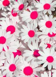100 Pz / borsa Mix Arcobaleno Margherita Semi di crisantemo Semi di fiori rari Crescita naturale Per La Casa Giardino Piantare C00501003 da semi di margherite fornitori