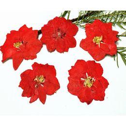Wholesale Gem Nails - China Factory Dye Red larkspur Dried Flower Art for Nail   Gem   Postcard DIY decoration 1 lot 120pcs free shipment