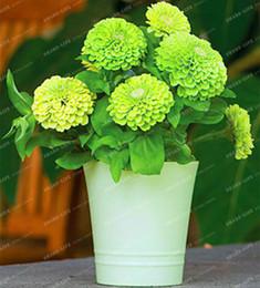 piccoli vasi da giardino Sconti Verde Zinnia elegans Scabiosa Mix Colore Piccolo Fiore Zinnia circa 100 pz Semi bonsai vaso Giardino Domestico di DIY Fiore Facile Crescere