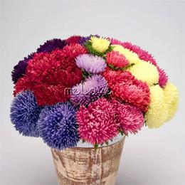 Semillas de aster online-Colorido Aster chino Flor 200 Semillas Aster Callistephus Produciendo enormes flores dobles, adecuados para jardines de flores, macetas, balcones, etc.