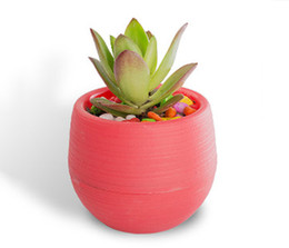 Wholesale modern plant pots - Wholesale 50PCS MOQ Colorful Mini Flower Pots Detachable Watering Flowerpot for Succulent Garden Unbreakable Plastic Nursery Pots