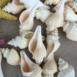 Wholesale Natural Style Landscaping - Free Shipping(1pcs lot)Ternatanus Natural Conch Shell Aquarium Landscaping Ocean Style Arts and Crafts Seabed Arts and Crafts