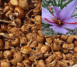 Melhores jardins de flores on-line-Atacado Açafrão Lâmpadas 10 pcs crocus sativus flores para obter melhor tempero orgânica corms 2016 bonsai planta jardim lâmpadas