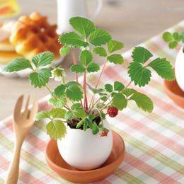 Wholesale Egg Plant - New Creative DIY Mini Lucky Egg Potted Plant Office Desktop Home Decor Basil Mint Mild Strawberry
