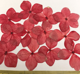 Wholesale Red Flower Nature Wholesale - 2017 Newest Red Hydrangea for Cristmas decoration Press Nature Plant DIY Material Diameter 2.5-3CM