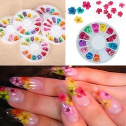 Fiori di chiodo online-36pcs unghie reali fiori secchi unghie decorazione di arte punte fai da te con il caso piccoli fiori chiodi strass per strumenti manicure
