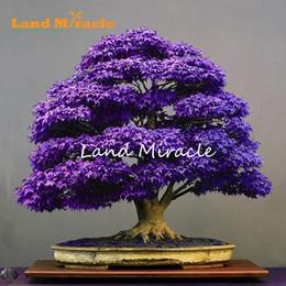 Piante da giardino viola online-Veri semi di bonsai albero giapponese acero fantasma viola, 10 semi / confezione, Acer palmatum atropurpureum per piantare il giardino per tutte le stagioni