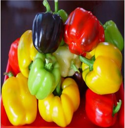 Wholesale Bell Pepper Planting - Colorful Bell Pepper Seeds Vegetable Seed balcony plants seed garden planting seeds potted plants seeds spring autumn sowing