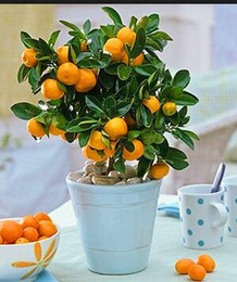 Wholesale Organic Decorations - Fruit seeds Dwarf Standing Orange Tree seeds Indoor Plant in Pot garden decoration plant 30pcs