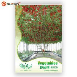 tomatenbäume Rabatt Original Pack Tomaten Baum Samen Balkon Topf Gemüse Obst Vitamine Tomatensamen - 6 Pcs