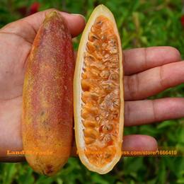 Fiori di banana online-Semi di frutto della passione rari a base di banana, 20 semi / confezione, fiore tropicale giardino tropicale Passiflora-Land Miracle