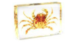 Wholesale Yellow Flower Types - Flower Crab Specimen Learning&Education Gifts Resin Embedded Crab Animal Transparent Mouse Paperweight Kids New Type Science&Discovery Kits