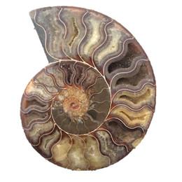 Аммонитовая оболочка онлайн-большой размер 400-500 г редкий Радужный аммонит Аммолит Кристалл каменная оболочка ископаемый образец исцеление сифонария раковина Мадагаскар