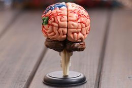 anatomy models Coupons - Wholesale- 4D master Human brain model structure model assembled Anatomy dimensional model 32pcs set free shipping