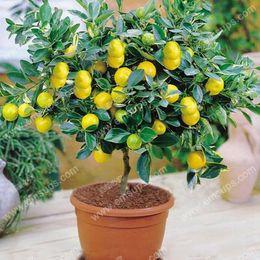 Wholesale Lemon Package - A Package 50 Pcs Citrus limon Tree Seeds Fruit Garden Terrace Seed Orchard Farm Family Potted Bonsai Tree Lemon Seeds