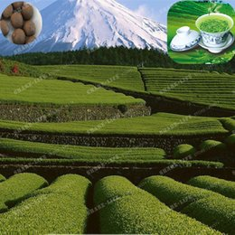 2019 albero di fiori di bonsai Nuovo raccolto cinese tè verde semi di albero fresco camelia sinensis seme giardino bonsai tè verde fiore pianta 10 pz spedizione gratuita sconti albero di fiori di bonsai
