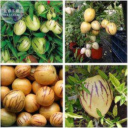 2019 semi solanum BELLFARM Solanum Muricatum Sweet Cetriolo Seeds, Professional Pack, pepino dulce melone pera frutta commestibile BD078H semi solanum economici