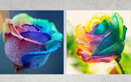 pintura colorida do rosa Desconto 5 D Diamante Pintura Colorido Rose Fleur String Strin Rinestone Fotos de Cristais Bordados Patchwork Home Decor
