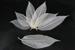 Wholesale Free Card Making - Free Shipping 500Pcs Natural Magnolia Skeleton Leaf Leaves DIY Crafts Card Making Scrapbooking in Nature White Color in 3 Size