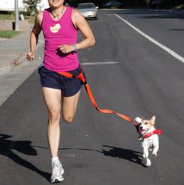 Wholesale G16 Nuevo envío de la gota Correa de perro para mascotas Correr Correr Collar de perro cachorro collar de deporte ajustable para caminar para Teddy