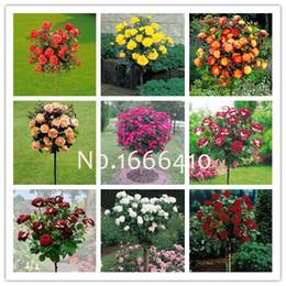 Cores do jardim de rosas on-line-1 Pacote Professional, 9 Cores Rose Semente, 100 Sementes / Pack, Bela Rose Tree Sementes Varanda Planta Para Casa Jardim-Terra Milagre
