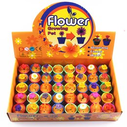 Wholesale Grow Big - Growing Flower Kids Toys Growing Pet for Children Adult Novelty Funny Amusing Valentine's Day Christmas Gift