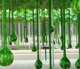 Wholesale Home Handle - 300Pcs a Set Long Handled Dipper Gourd SEED Home Garden Reasonable Choice Gift For Your Friend