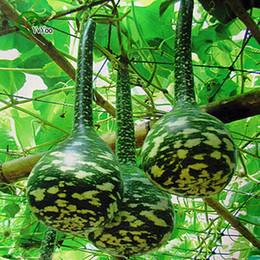 semi di zucca Sconti Swan Bottle Gourd Seeds giardino vegetale vegetale semi facile da coltivare 5 pezzi H14