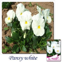 Wholesale Viola Tricolor Flower - Buy 2 Get 1!(Can accumulate ) 1Pack 30 Seed White Viola Tricolor Pansy Flower Seeds A087
