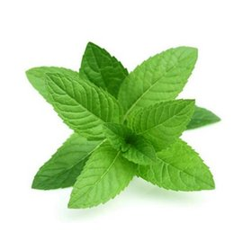 Wholesale Chinese Herbs Free Shipping - Home plants PERENNIAL herb mint seeds chinese herb good smell mint seeds for medical and eating also drink tea free shipping