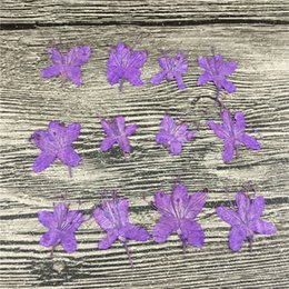 Wholesale Taro Wholesalers - Home Ornament Taro Purple Rhodo Natural Plant Press Flower Material For DIY Expoxy And Painting Art Crafts Wholesale 120Pcs
