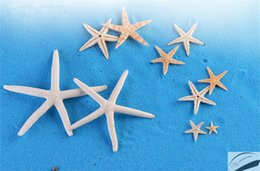 Wholesale Beach Shells Crafts - G2B4 Micro Landscape Home Table Garden Decor Ornaments Gifts Crafts Decoration DIY Cartoon Toys Collection Starfish Shell Sea Beach