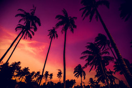 superbes images photographiques Promotion Beautiful Purple Sky Palm Trees Sunset Beach Photographie arrière-plan Nightfall Scenic Wallpaper Été Holiday Wedding Photo Backdrops 10x8ft